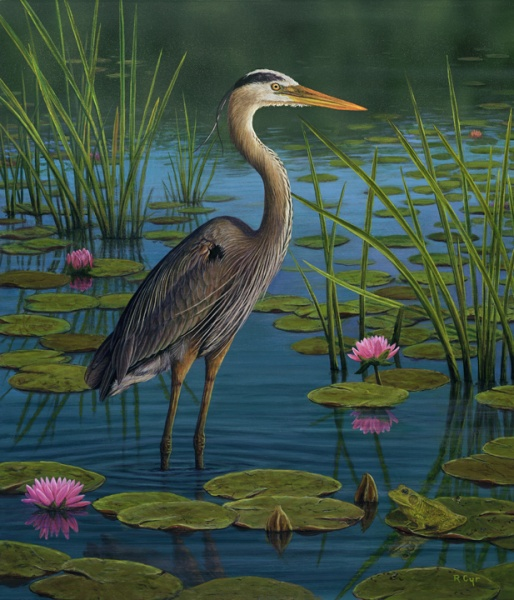 Great Blue Heron Chatham Fine Art Chatham Fine Art